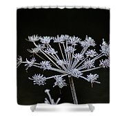 Frosted Hogweed Shower Curtain