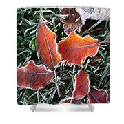 Frosted Leaves Shower Curtain