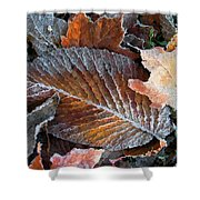 Frosted Painted Leaves Shower Curtain