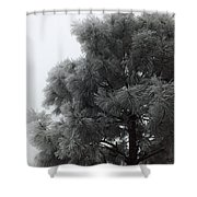 Frosted Pine Shower Curtain