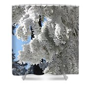 Frosted Pine Needles Shower Curtain