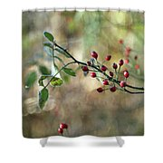 Frosted Red Berries And Green Leaves  Shower Curtain