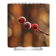 Frosted Rose Hips Shower Curtain