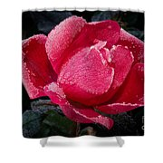 Frosted Rose Shower Curtain