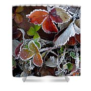 Frosted Strawberries Shower Curtain