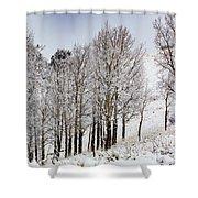 Frosty Aspen Trees Shower Curtain