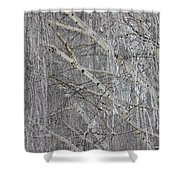 Frosty Birch Tree Shower Curtain