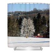 Frosty Birch Shower Curtain