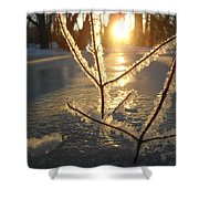 Frosty Branches At Sunrise Shower Curtain