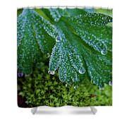 Frosty Dewdrops Shower Curtain