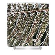 Frosty Fern - 365-322 Shower Curtain
