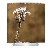 Frosty Flower Remains Shower Curtain