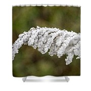Frosty Frond Shower Curtain