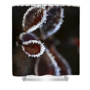 Frosty Leafs Shower Curtain