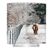Frosty Mare Shower Curtain