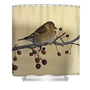 Frosty Perch Shower Curtain