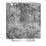 Frosty Pine Tree Shower Curtain