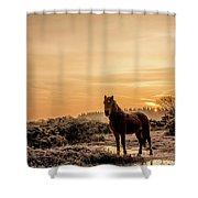 Frosty Pony Shower Curtain