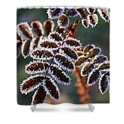 Frosty Rose Leaves Shower Curtain