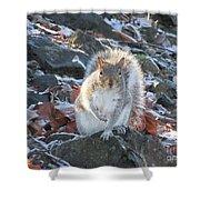 Frosty Squirrel Shower Curtain