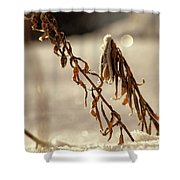 Frozen And Fragile - No. 1 Shower Curtain