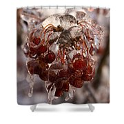 Frozen Berries Shower Curtain