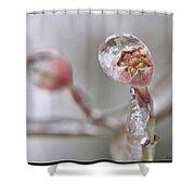 Frozen Dogwood Bud Shower Curtain