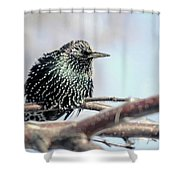 Frozen Feathers Shower Curtain