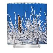 Frozen Fence Post Shower Curtain