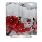 Frozen Flowers Shower Curtain