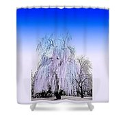 Frozen Fog Shower Curtain by Myrna Migala