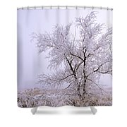Frozen Ground Shower Curtain
