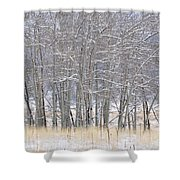 Frozen Limbs Shower Curtain