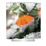 Frozen Marigolg Shower Curtain