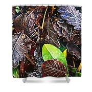 Frozen Oak Leaves, Glenveagh National Shower Curtain