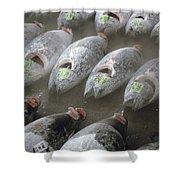 Frozen Tuna Fish At The Tsukiji Shower Curtain