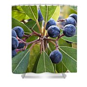 Fruit And Leaves Of The Red Bay Shower Curtain