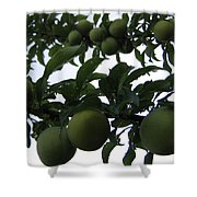 Fruit And Sky_raindrops Shower Curtain