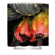 Fruit Is The Star Shower Curtain