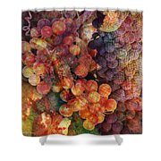 Fruit Of The Vine Shower Curtain by Barbara Berney