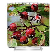 Fruit Of The Wild Rose Shower Curtain