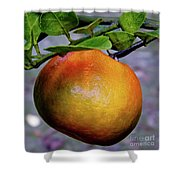 Fruit On The Tree Shower Curtain