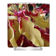 Fruit Roll Up Plant Shower Curtain