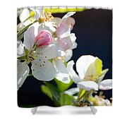 Fruit Tree Blossom Shower Curtain