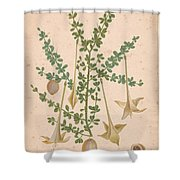 Frutex Spinosus Shower Curtain