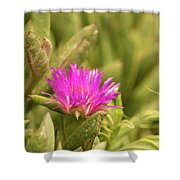 Fuchsia Bloom Shower Curtain