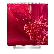 Fuchsia Flower Shower Curtain