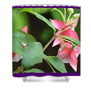 Fuchsia From Above Shower Curtain