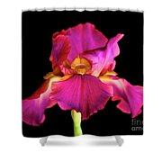 Fuchsia Iris Shower Curtain