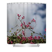Fuchsia Mexican Coral Vine On White Clouds Shower Curtain